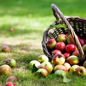 Äpfel, Birnen & Mus